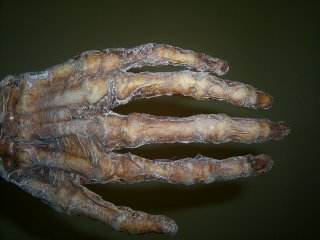 Prop Skeleton Hand